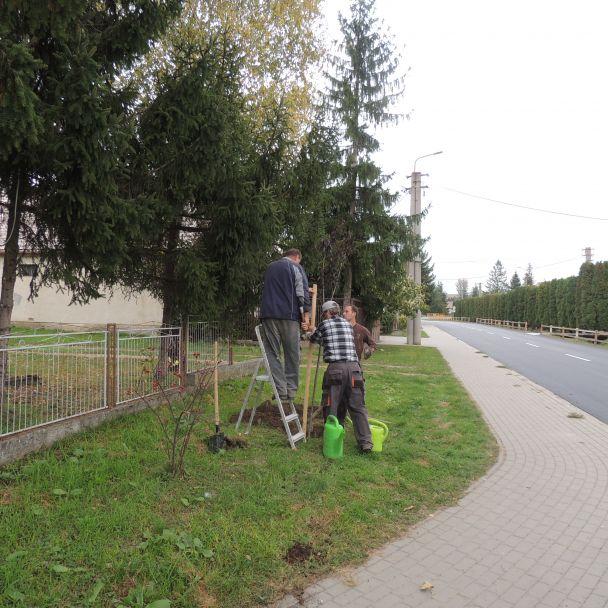 Výsadba zelene - 2014